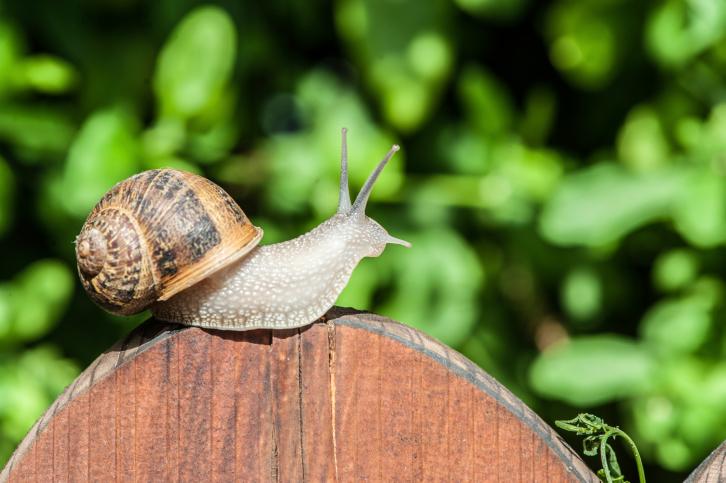 Sposób na ślimaki w ogrodzie