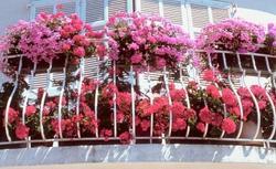 Kwiaty balkonowe. Jakie kwiaty doniczkowe wybrać do ozdoby balkonu?