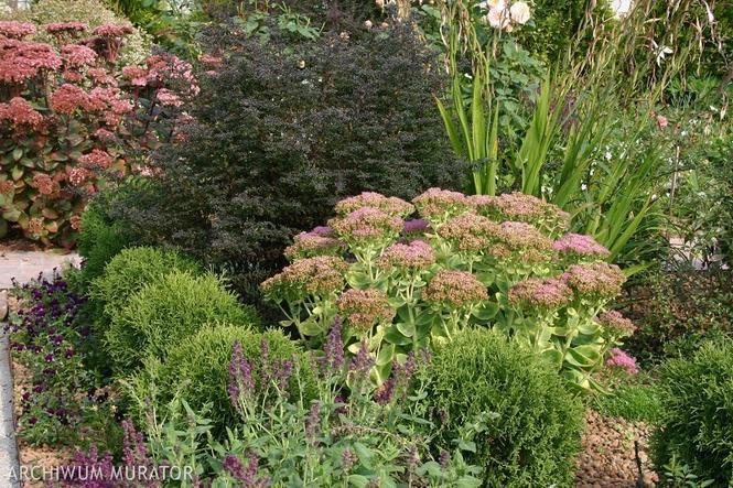 Kwiaty w ogrodzie - dziki ogród