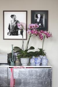 Pielęgnacja roślin pokojowych zimą - podlewanie storczyków