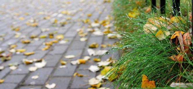 Kostka brukowa - pielęgnacja jesienią