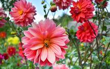 Rośliny miododajne do ogrodu: uprawa i zastosowanie roślin, które lubią pszczoły