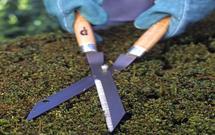 Cięcie pielęgnacyjne, cięcie formujące, cięcie korygujące i cięcie odmładzające. Jak dobrze ciąć drzewa i krzewy