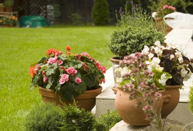 Ogród w doniczce