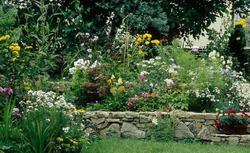 Rabata kwiatowa - kwiaty na rabaty ogrodowe przed domem