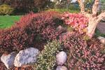Pomysł na ogród ozdobny: wrzosowisko w roli głównej